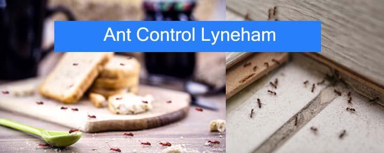 Ant Control Lyneham