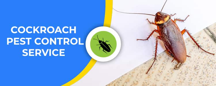 Cockroach Control Lyneham
