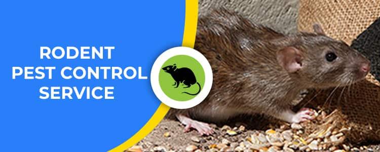 Rodent Control Lyneham