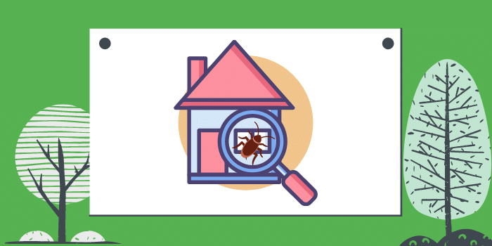 What To Do During A Home Pest Inspection